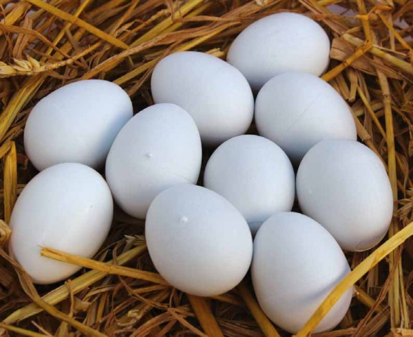Fallenköder Ei Kunststoff, 5 Stück